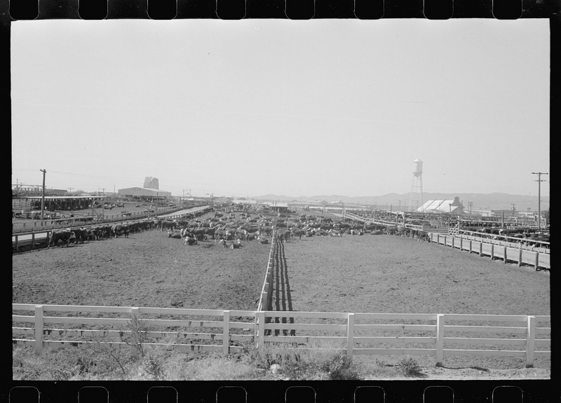 Cattle Pens, 1940