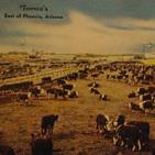 Postcard Showing Tovrea's Stockyards, ca. 1940s