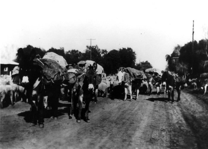 Rush Hour on Scottsdale Road